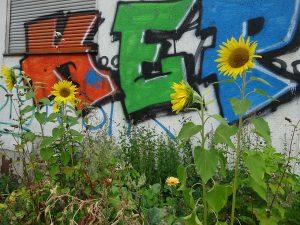 Sonnenblumen vor der Wand